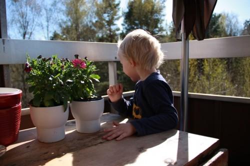 Caesar på balkongen